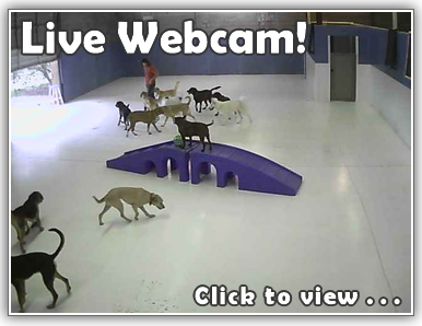 See your dog or cat on our webcam